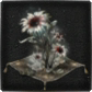Bloodborne_Icon_Mats_Blooming_Coldbloob_Flower.png